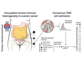 Unraveling tumor–immune heterogeneity in advanced ovarian cancer uncovers immunogenic effect of chemotherapy